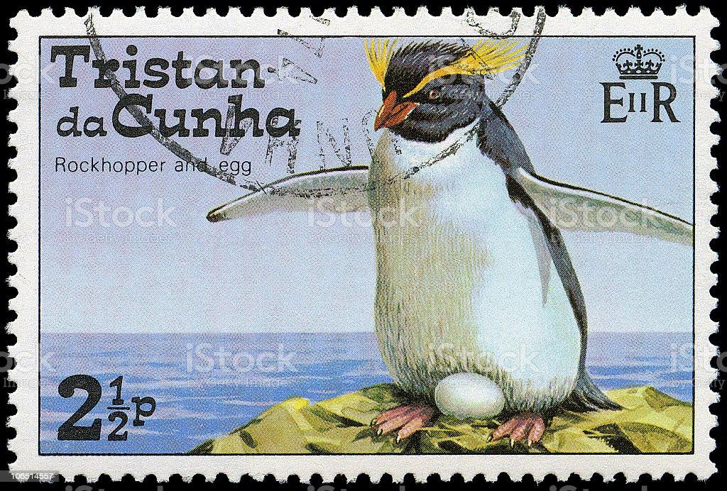 Rockhopper Penguins of Tristan da Cunha royalty-free stock photo
