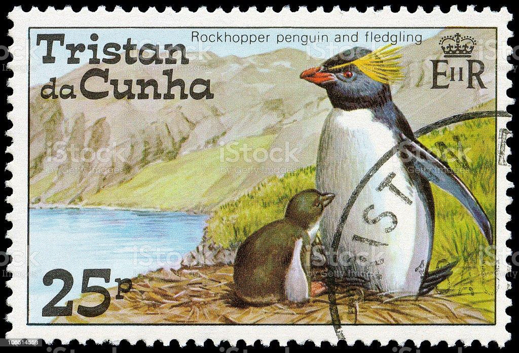 Rockhopper Penguins of Tristan da Cunha stock photo