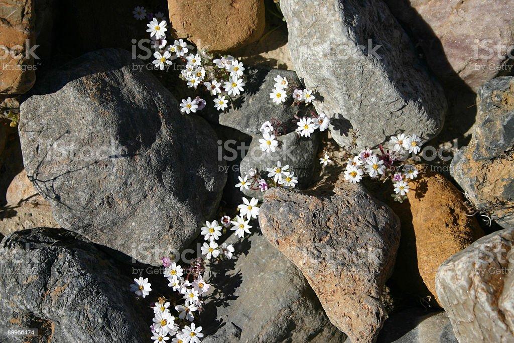 Flores de Embalar foto de stock royalty-free