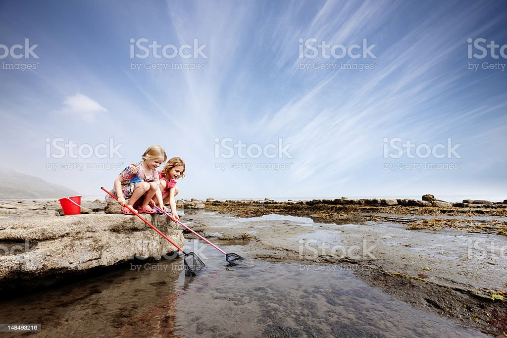 Rockpool fun stock photo