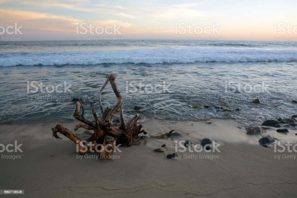 Rocks and a large peice of a tree sit on the shore while waves crash in the distance at sunset. stock photo