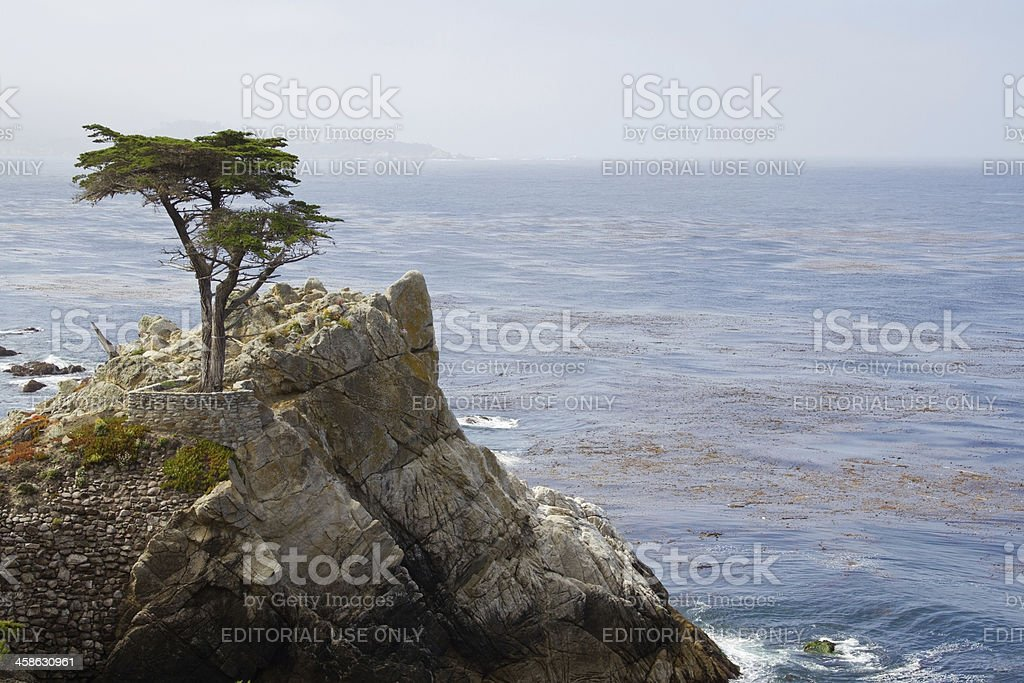 Rocks and Cypress Tree stock photo