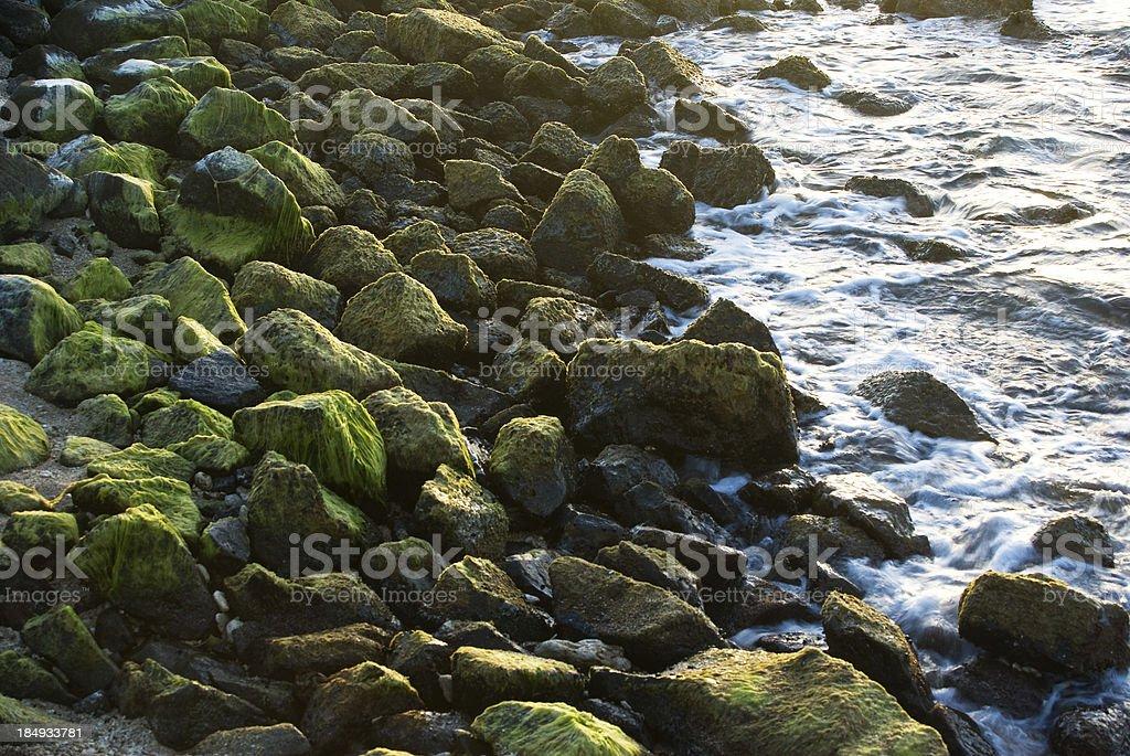 rocks and green algae stock photo