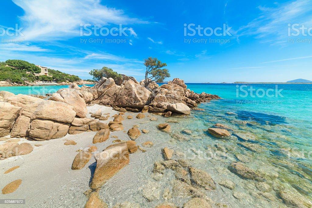 rocks and plants in Capriccioli beach stock photo