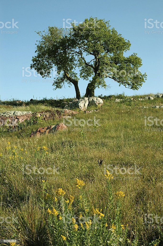 Горы и дерево Стоковые фото Стоковая фотография