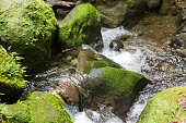 Rocks at Emerald Pool on Dominica