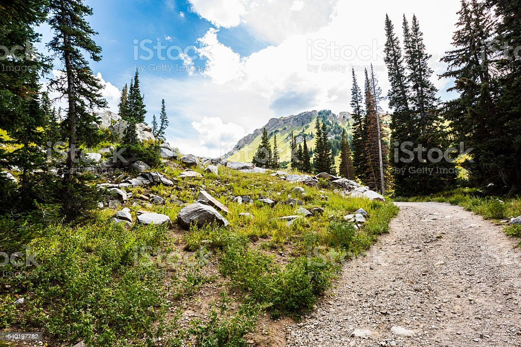 Rocky Alpine Meadows at Albion Basin in Utah stock photo