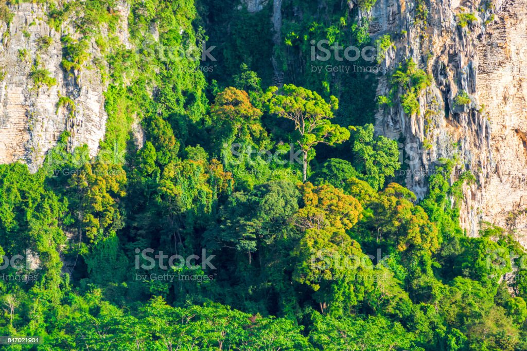rocky cliff with growing tropical trees on it stock photo
