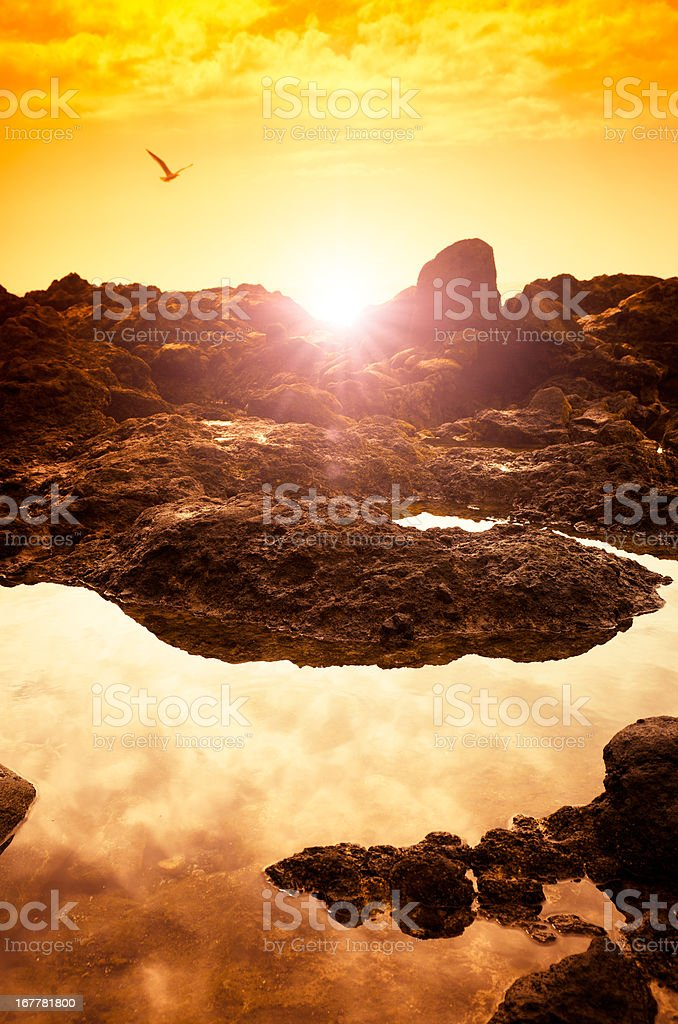 Rocky coast sunset view with seagull - Tenerife royalty-free stock photo