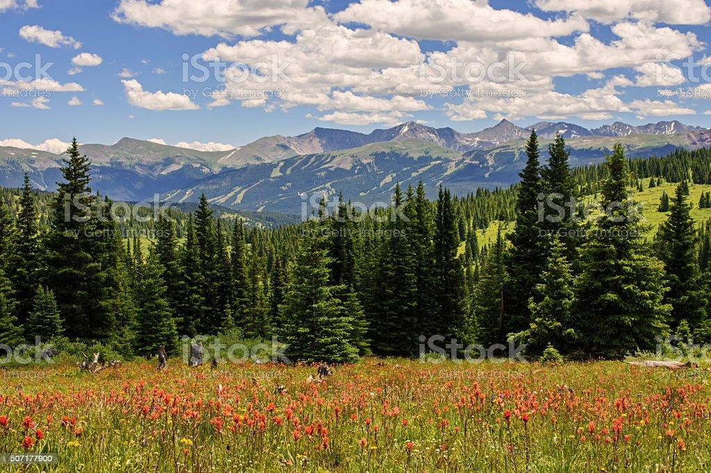 Rocky Mountain Alpine Meadow stock photo