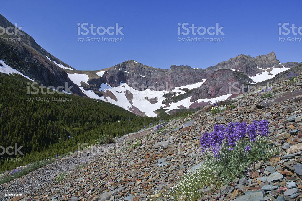 Rocky Mountain Flowers stock photo