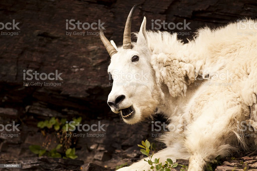 Rocky Mountain Ghost stock photo