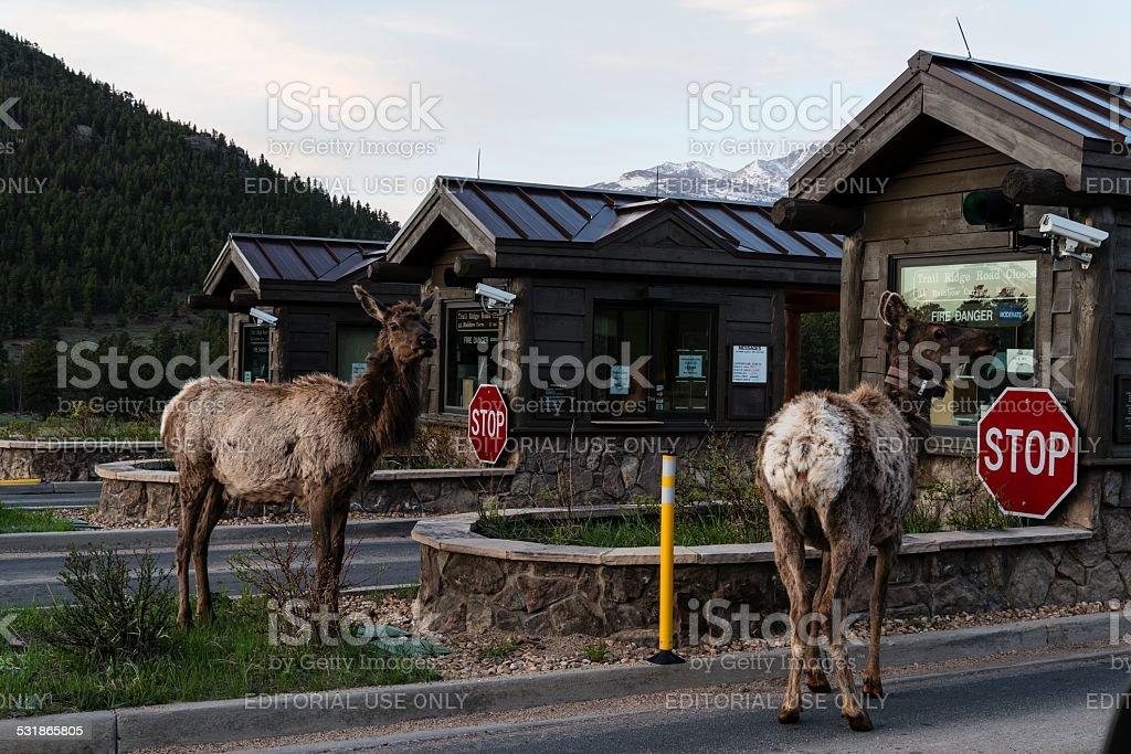 Rocky Mountain National Park, Colorado stock photo