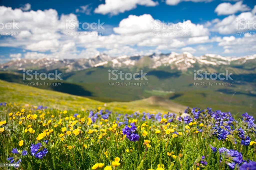 Rocky Mountain Range and Wildflowers stock photo