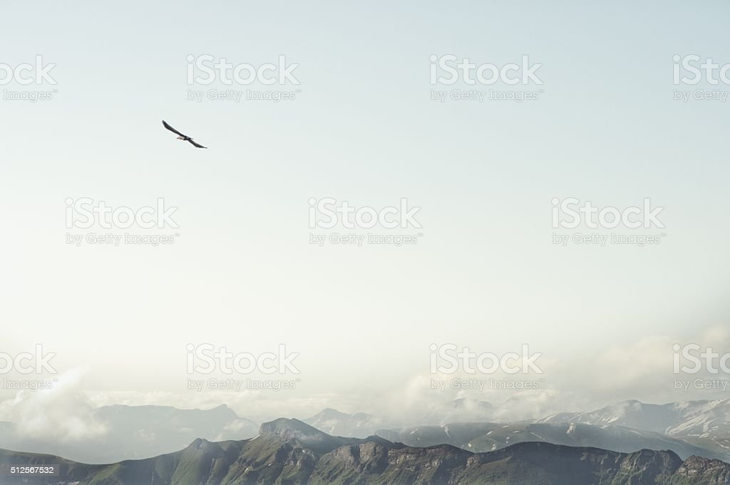 Rocky Mountains and flying eagle bird Landscape stock photo