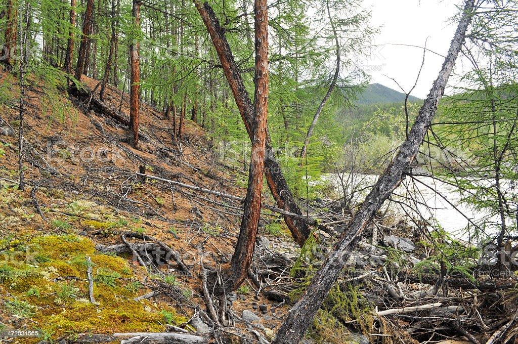 Rocky precipice in Yakutia. stock photo