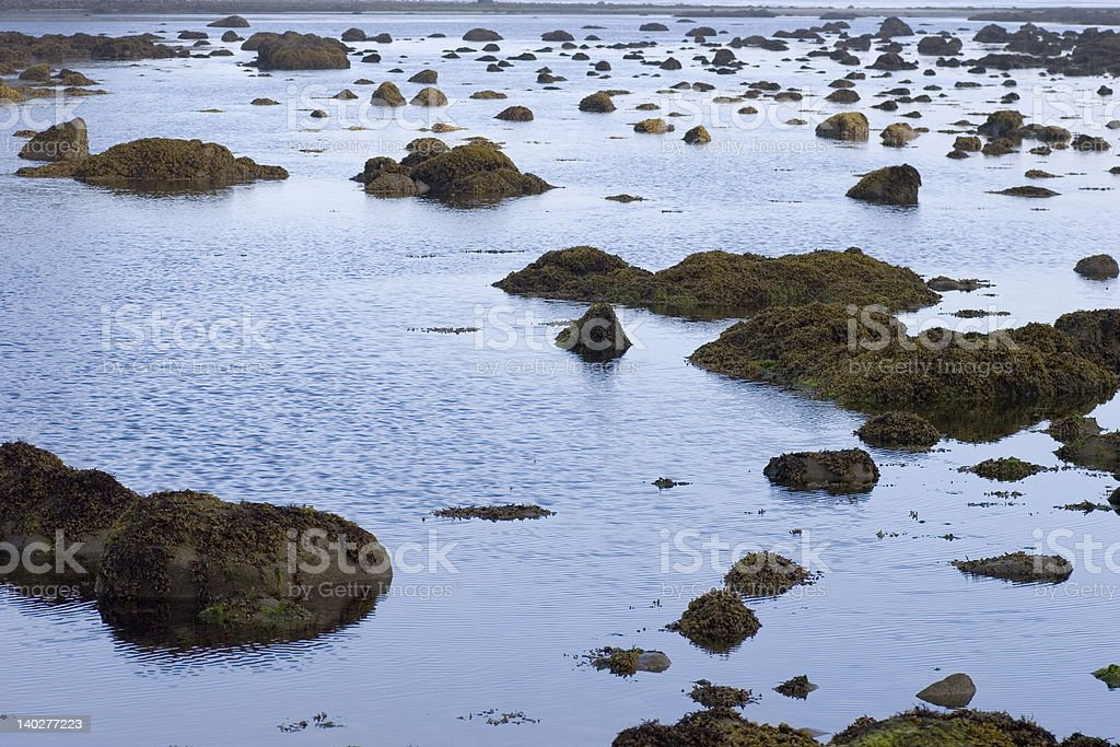 Rocky reefs at low tide royalty-free stock photo