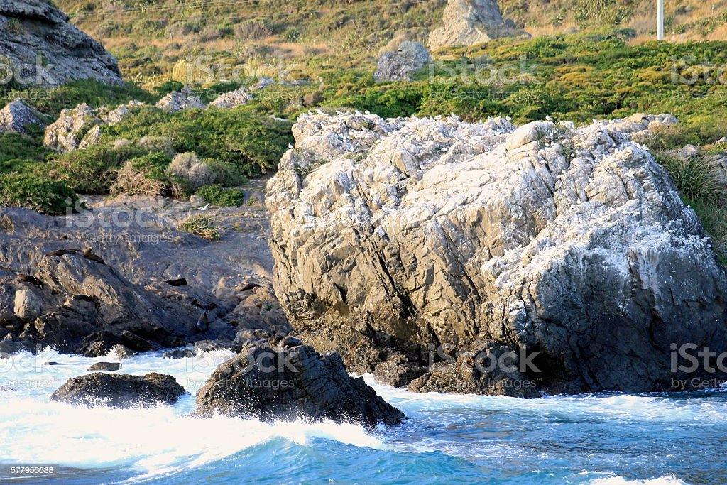 Rocky Seal and Seagull Colony, Cape Palliser, New Zealand stock photo