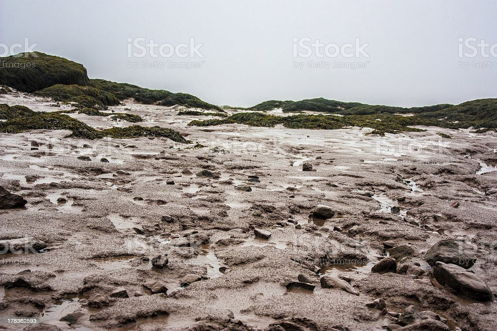 Rocky Shore with sea weed stock photo