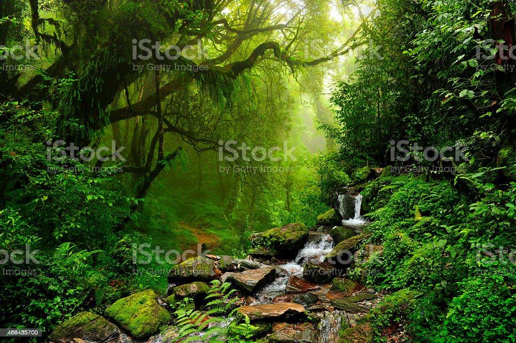 Rocky stream and rainforest in Selva de Nepal stock photo