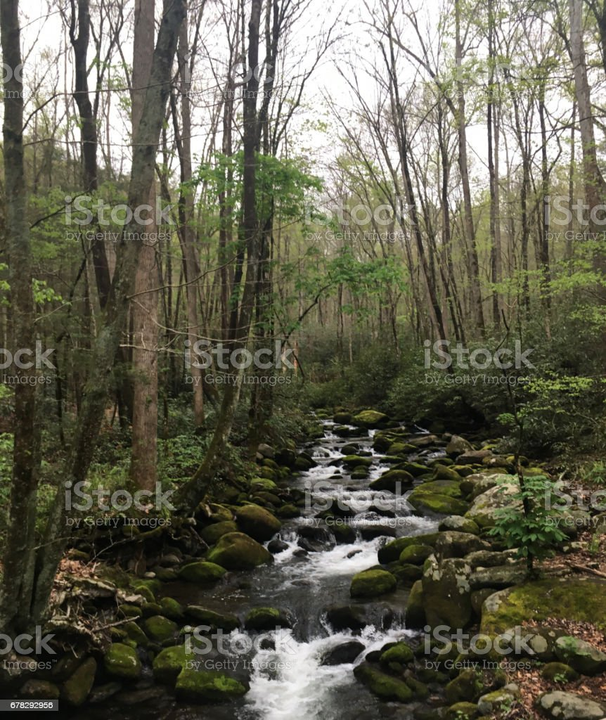 Rocky Stream in the Forest stock photo