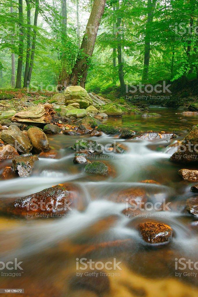 Rocky Stream Running Through Green Forest stock photo