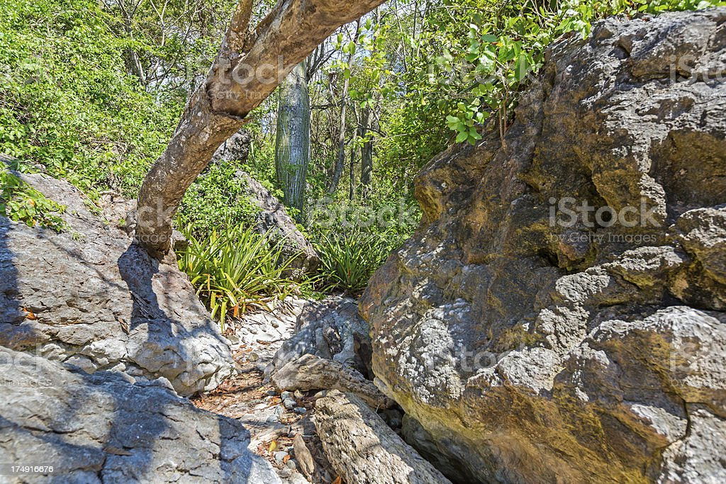 Rocky terrain photographed in the Cloud Forest of Costa Rica royalty-free stock photo