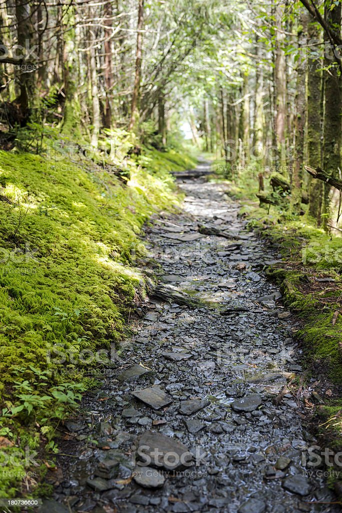 Rocky trail in the Great Smoky Mountains National Park royalty-free stock photo