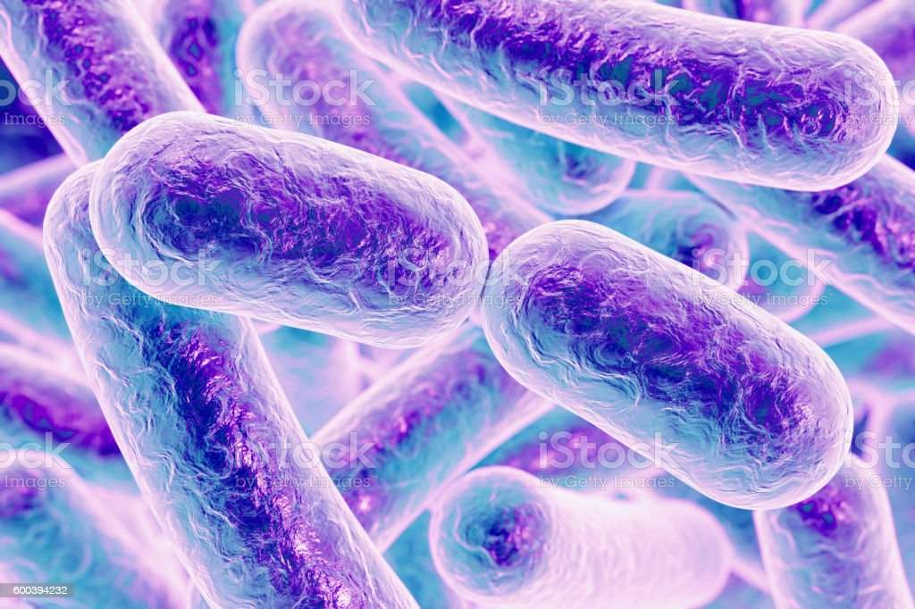 Rod shaped bacteria stock photo