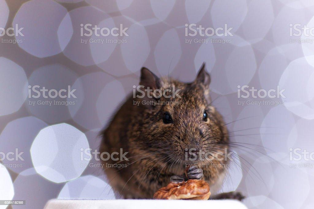 rodent eats stock photo
