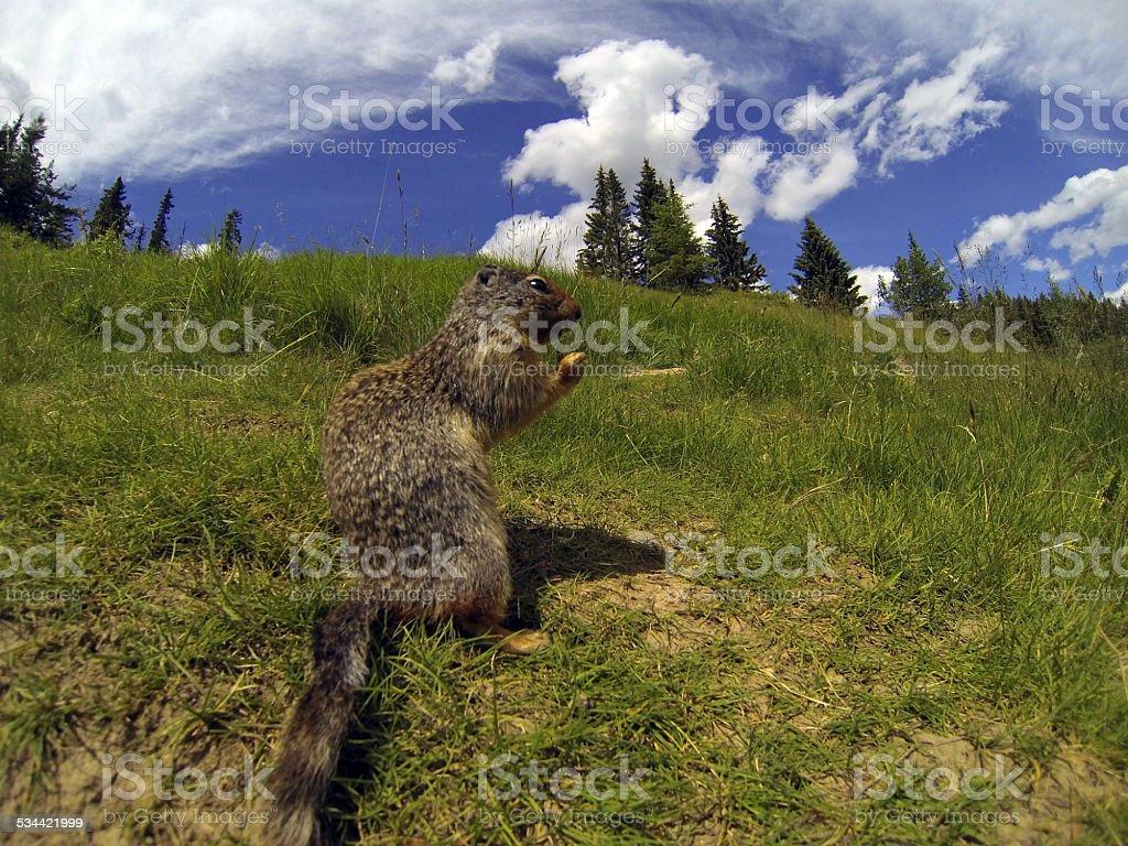 Rodent enjoying a sunny day stock photo