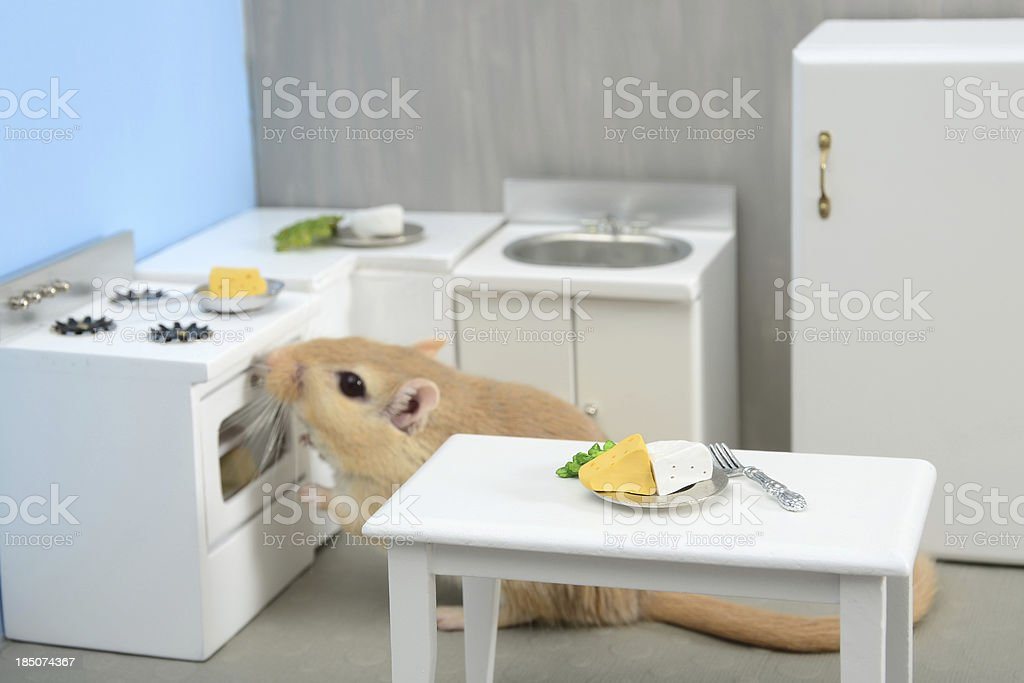 Rodent in the Kitchen stock photo