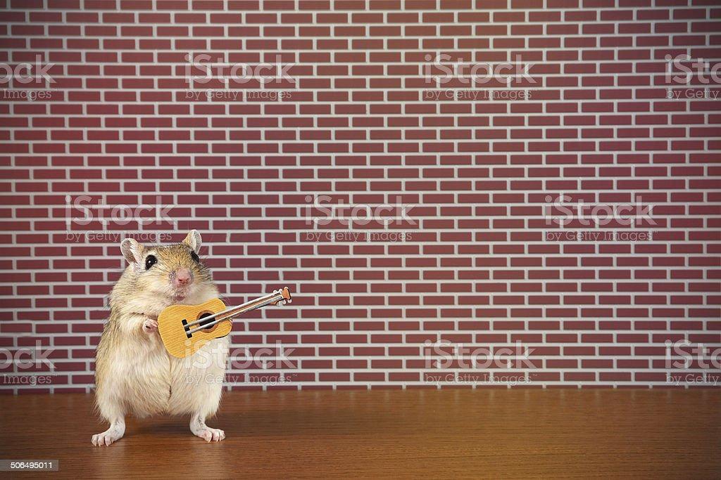 Rodent Rockstar stock photo