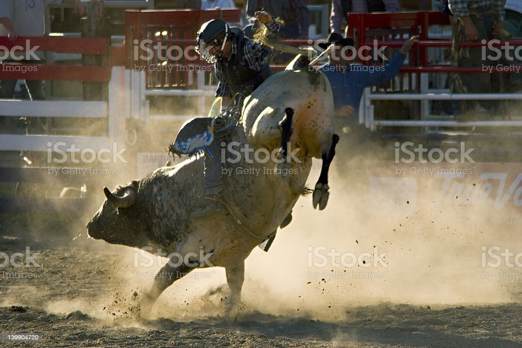 Rodeo Bull and Rider stock photo