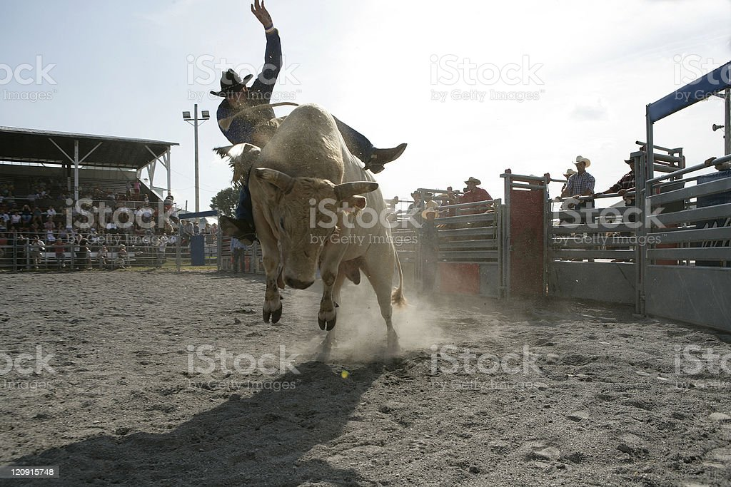 Rodeo - Bull Riding stock photo