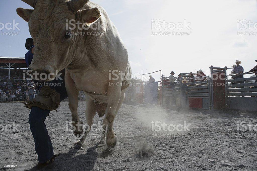 Rodeo - Bull Riding stock photo