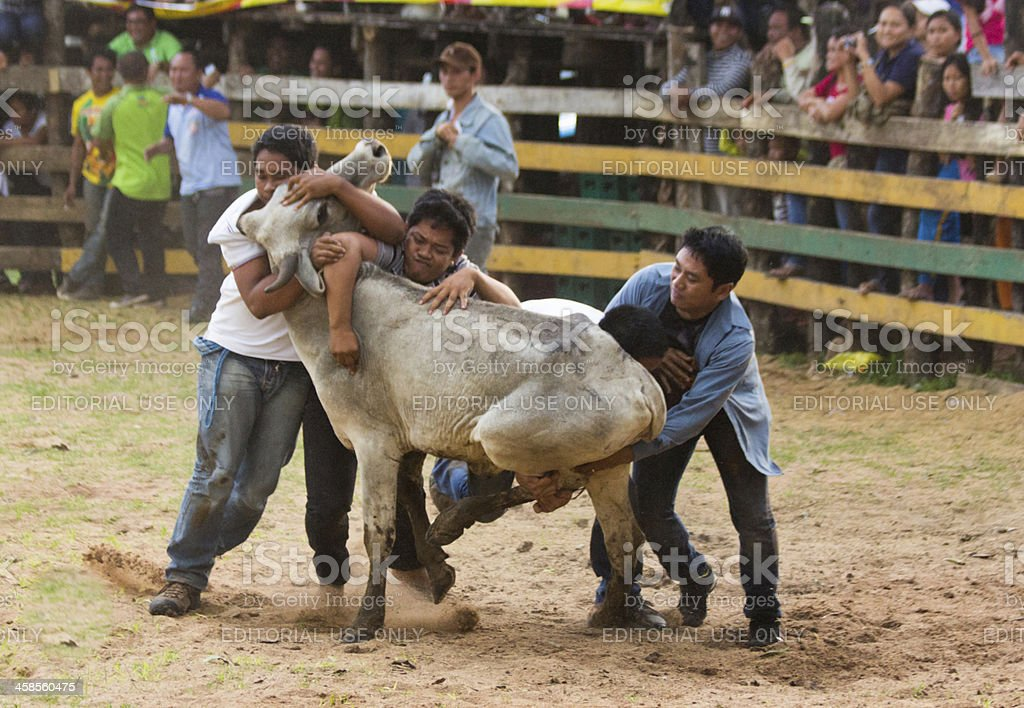 Rodeo catte wrestling stock photo