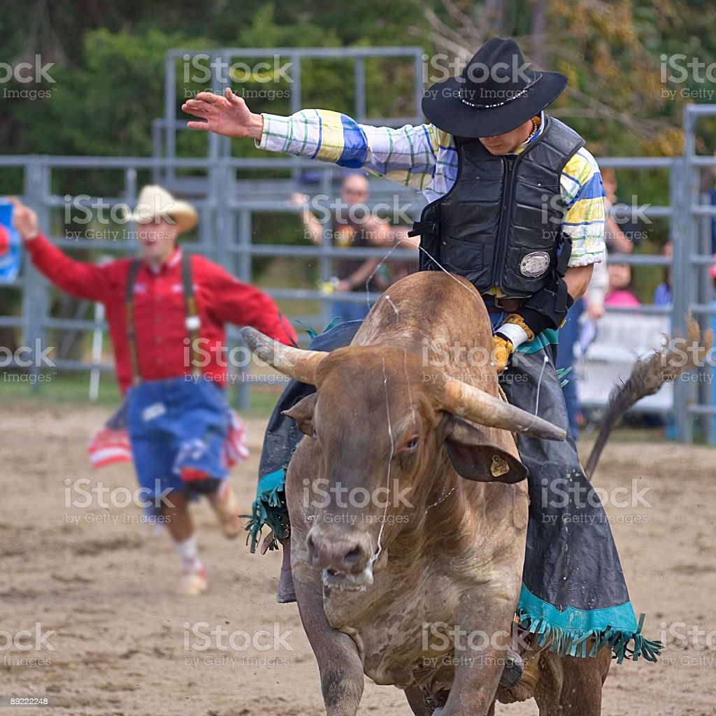 Rodeo cowboy riding a bull - head on royalty-free stock photo