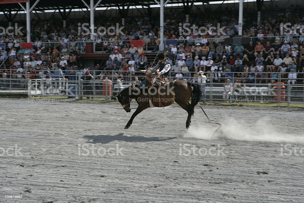 Rodeo - Horse Riding royalty-free stock photo