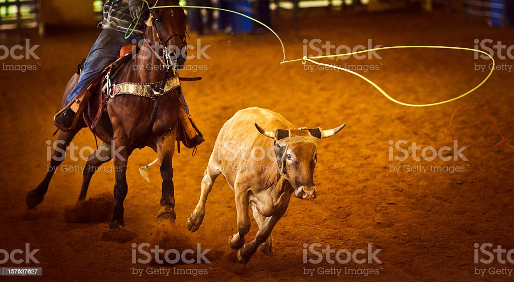 Rodeo Team roping stock photo