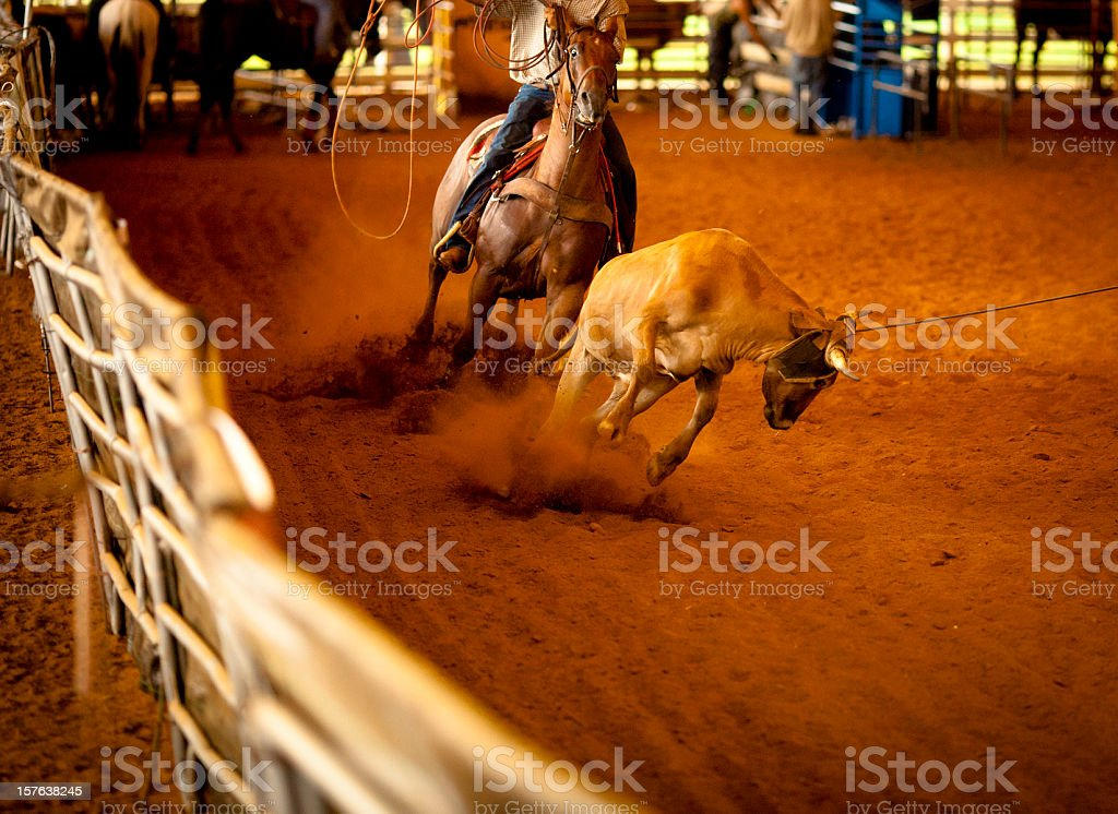team roping action stock photo