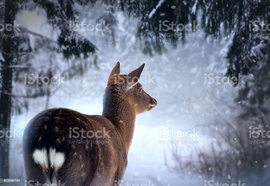 roe-dear in winter forest stock photo