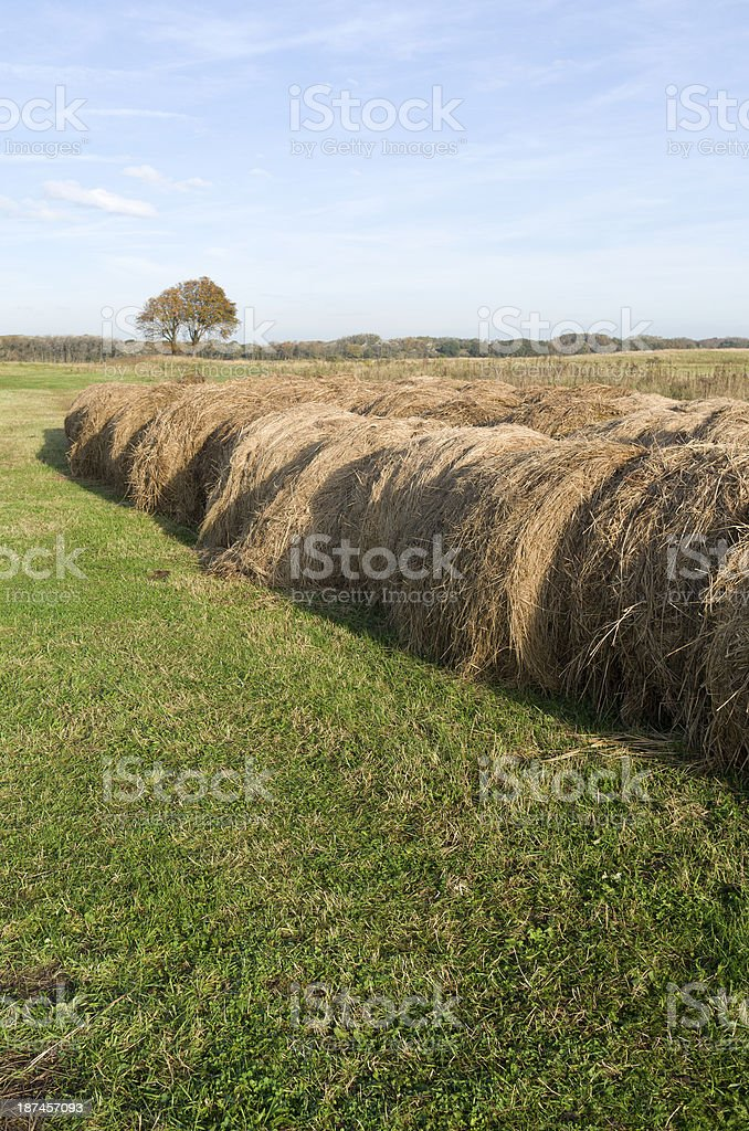 Rolled hay bales in the dunes. stock photo