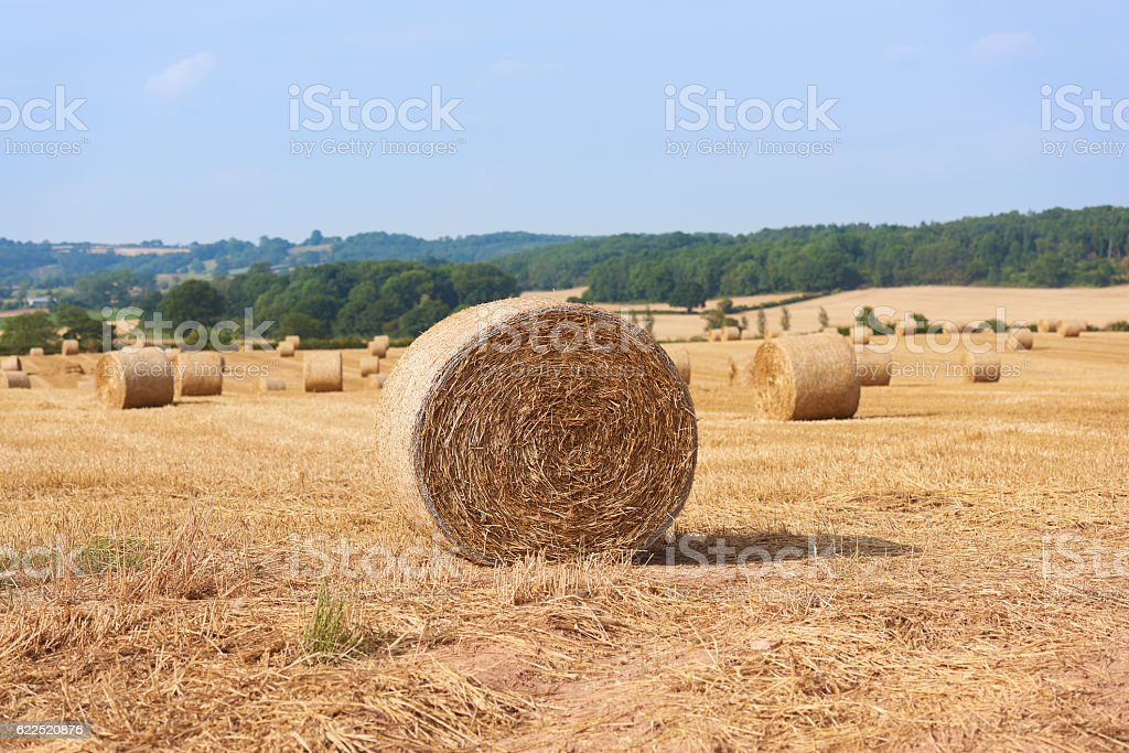 Rolled Hay in a field stock photo