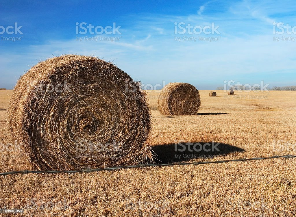 Rolled Hay in Kansas Field royalty-free stock photo