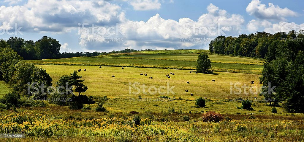 Rolled haystacks on a field after harvest stock photo
