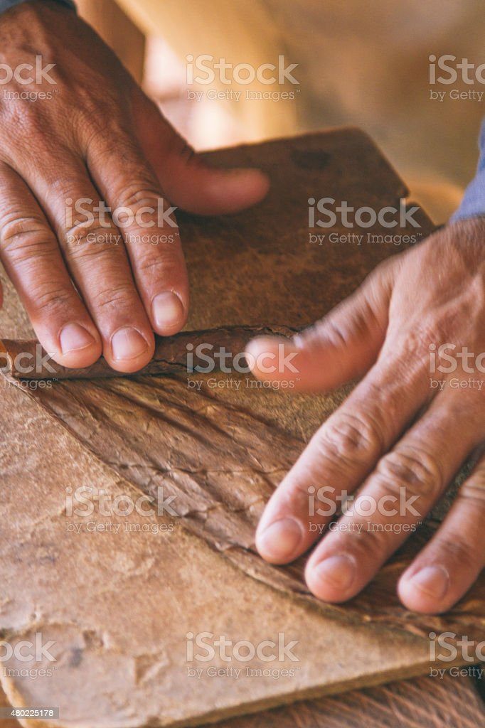 Rolling a cigar stock photo