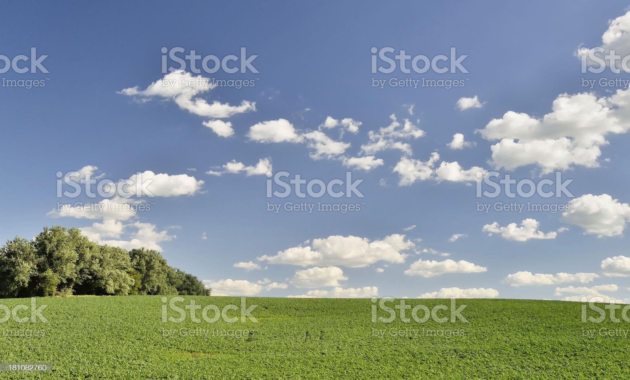 Rolling Farmland, Iowa royalty-free stock photo