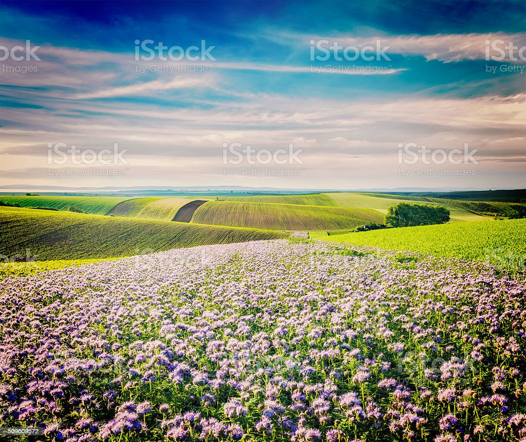 Rolling fields of Moravia stock photo