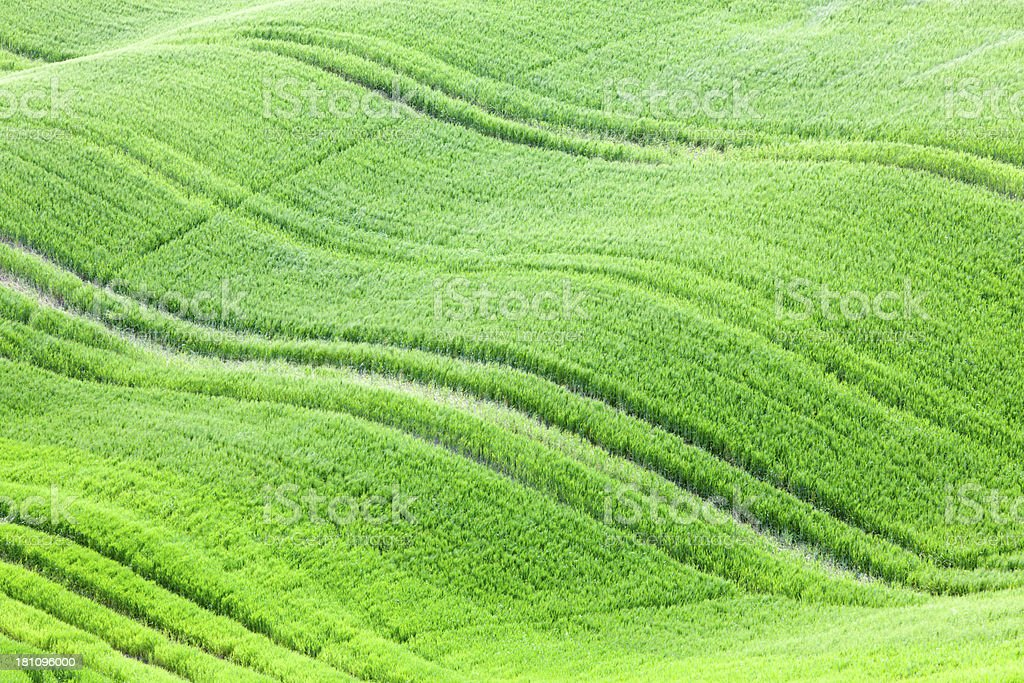 Rolling Green Fields in Spring, Val d'Orcia, Tuscany, Italy stock photo